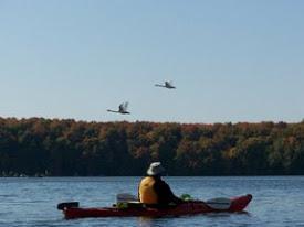 kayaks and geese