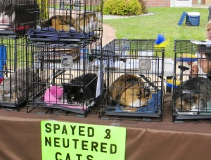 Clare County Animal Shelter found new homes for dogs and cats