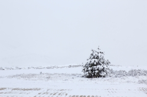 lone-winter-tree_GkbhPPFu